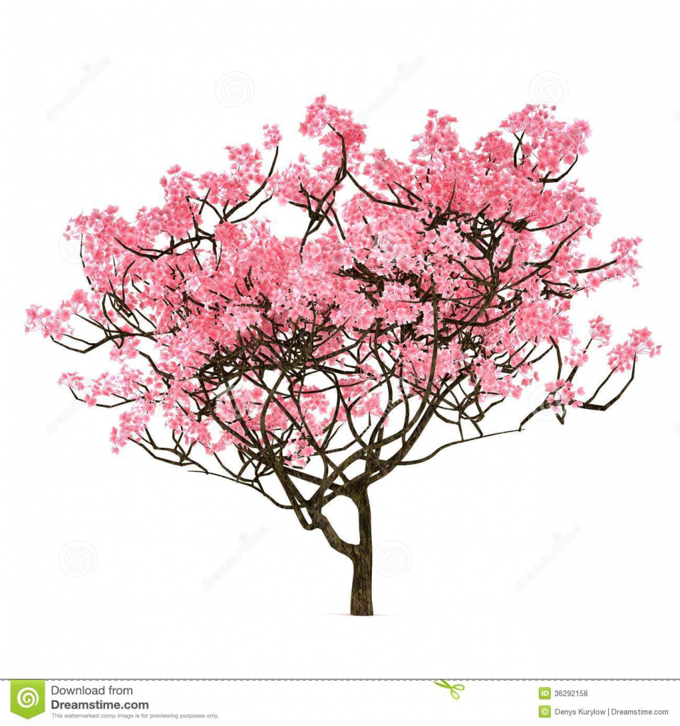 958x1024 Drawing Of A Cherry Blossom Tree How To Draw A Japanese Cherry
