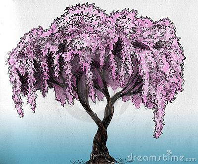 400x332 Sakura (Cherry, Plum Of Apple Tree) In Blossom. Pencil Drawing