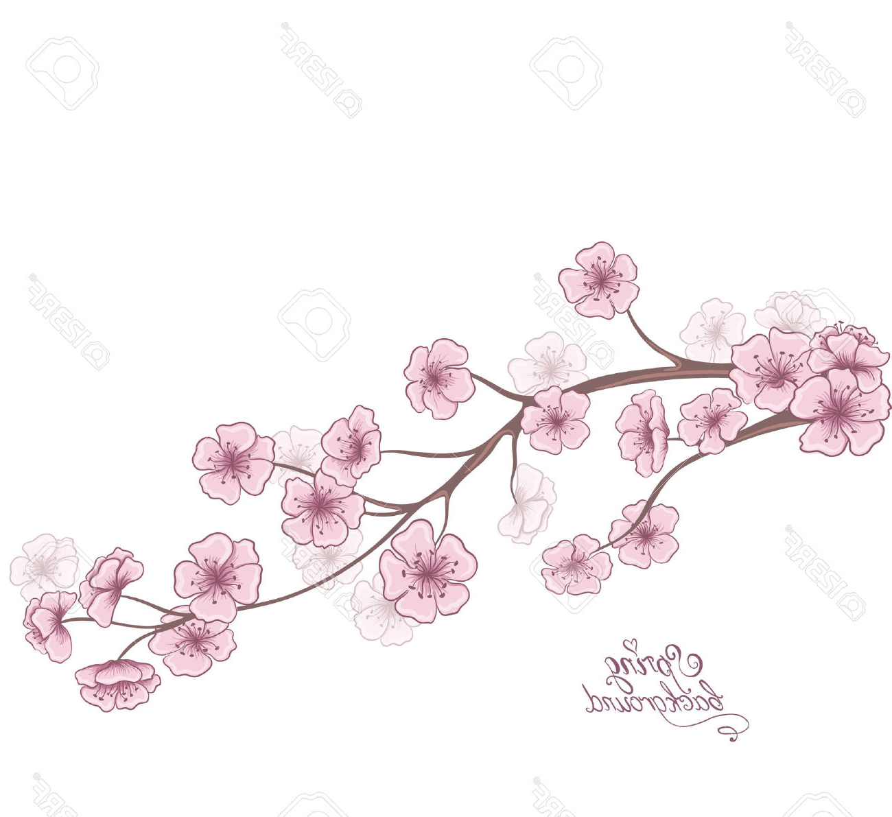 1300x1191 Cherry Blossom Flower Branch Drawing Cherry Branch In Blossom