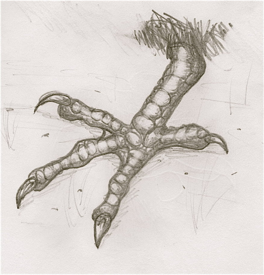 877x912 Evil Chicken Foot By Beckyholly