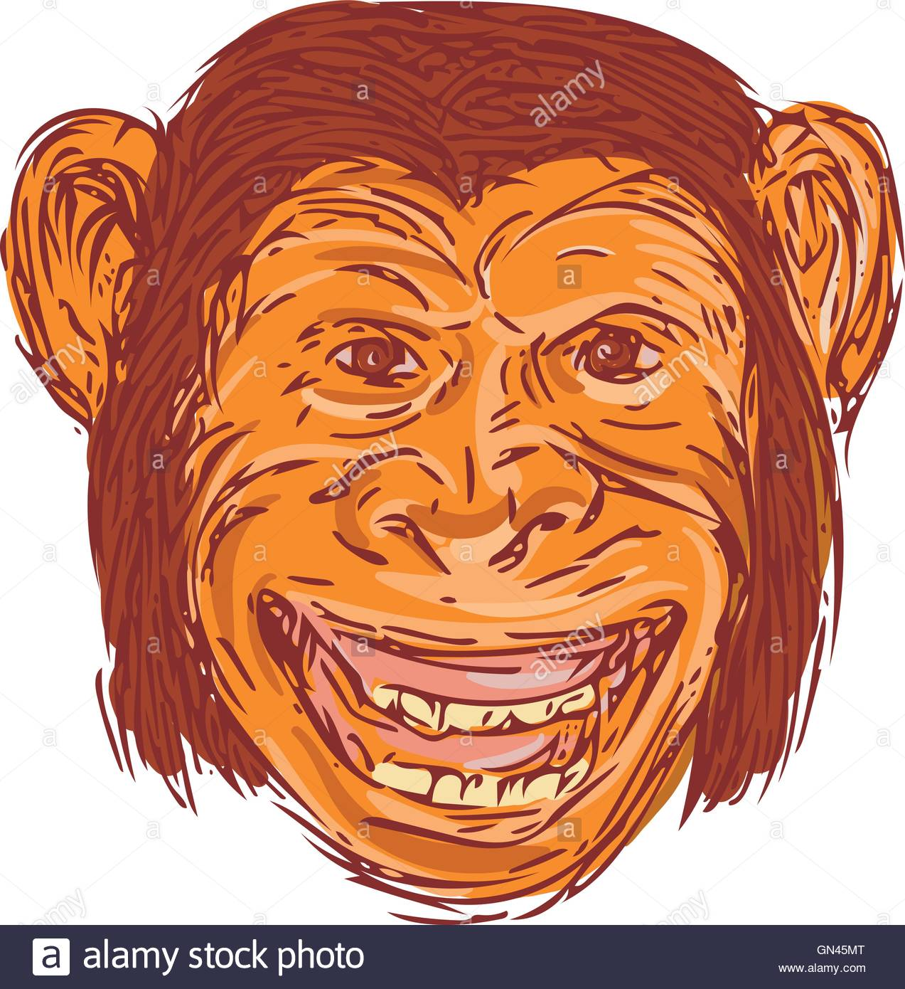 1273x1390 Chimpanzee Head Front Isolated Drawing Stock Vector Art