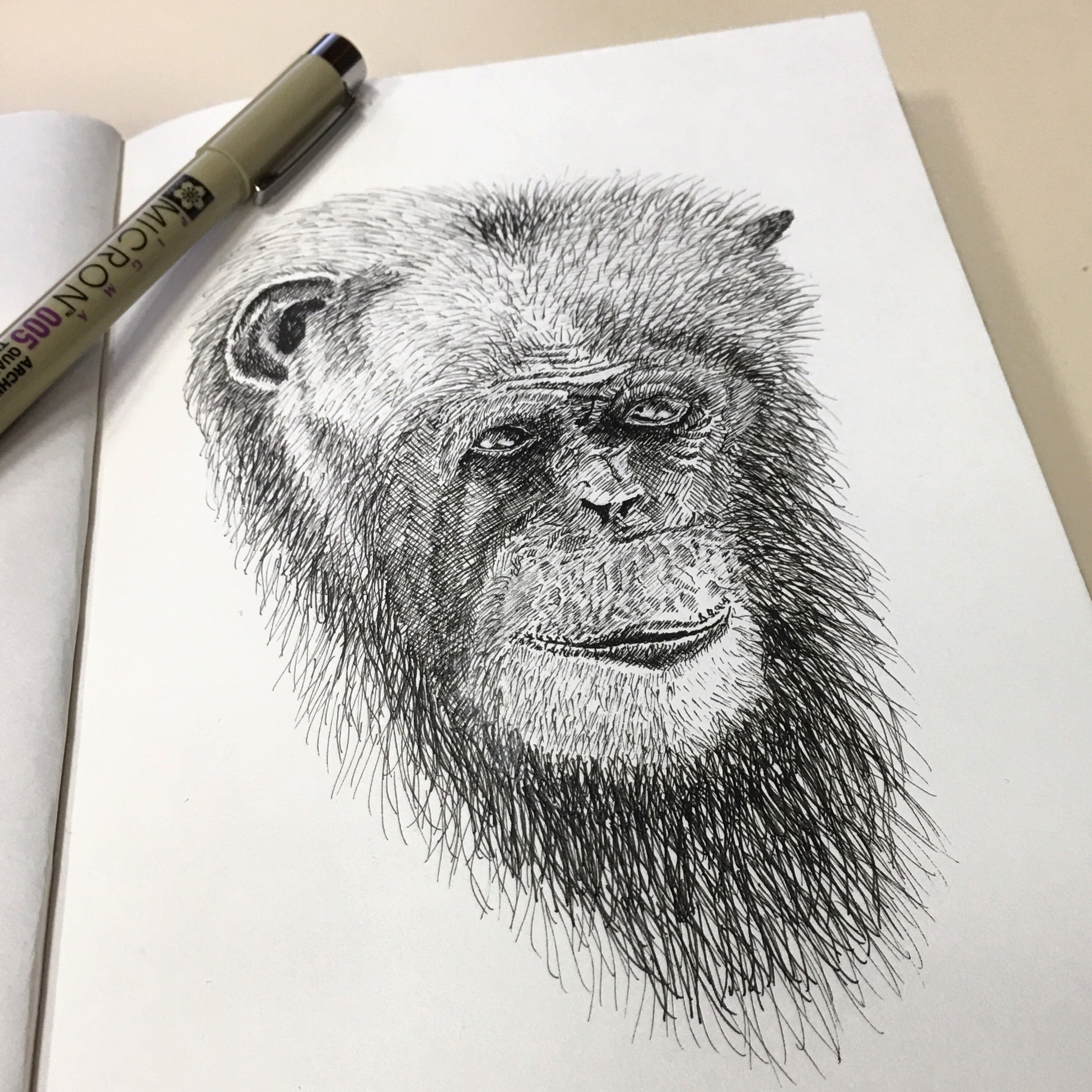2415x2415 Pen And Ink Drawing Chimpanzee Portrait Creative Pursuits
