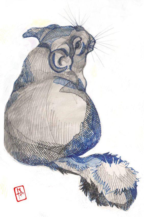 564x853 Amazing Chinchilla Drawing. Chinchillas