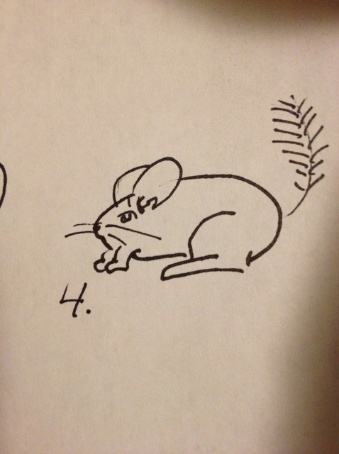 478x640 How To Draw A Chinchilla