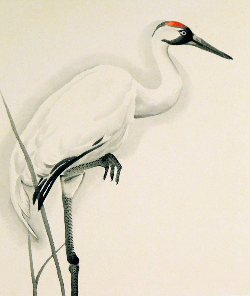 844x1000 Japanese Crane Pencil Drawing