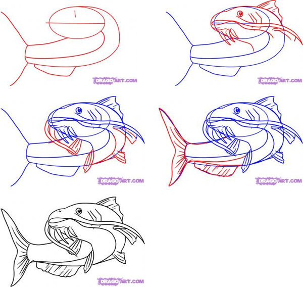 600x568 How To Draw A Catfish How To Draw Fish