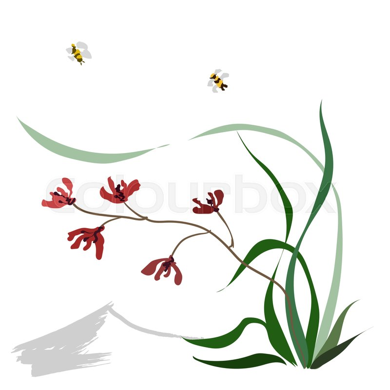 800x800 Hand Drawing Ink Illustration, Vector Stylization. Wild Orchid
