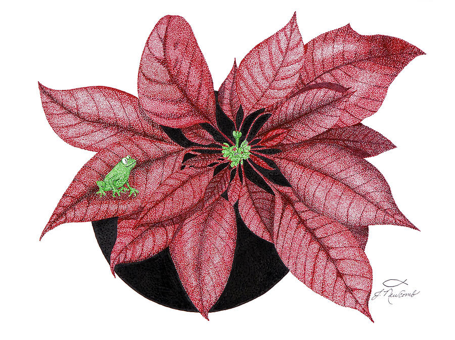 900x673 Christmas Poinsettia Drawing By Judy Cheryl Newcomb