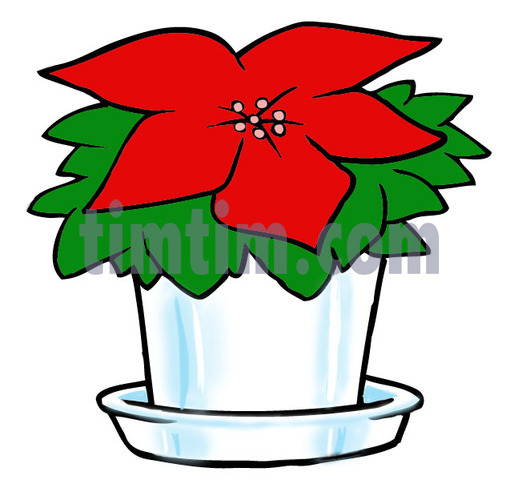 518x480 Free Drawing Of A Christmas Poinsettia From The Category
