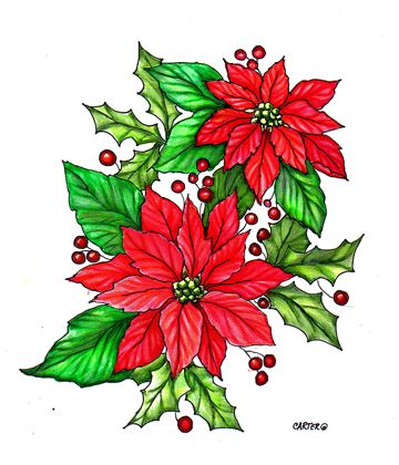 360x420 Poinsettia Drawing