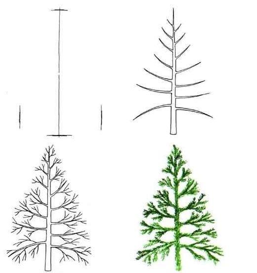 520x552 How To Draw A Pine Tree Drawing Pine Tree Pine