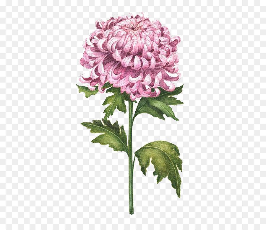 how to draw chrysanthemum flower