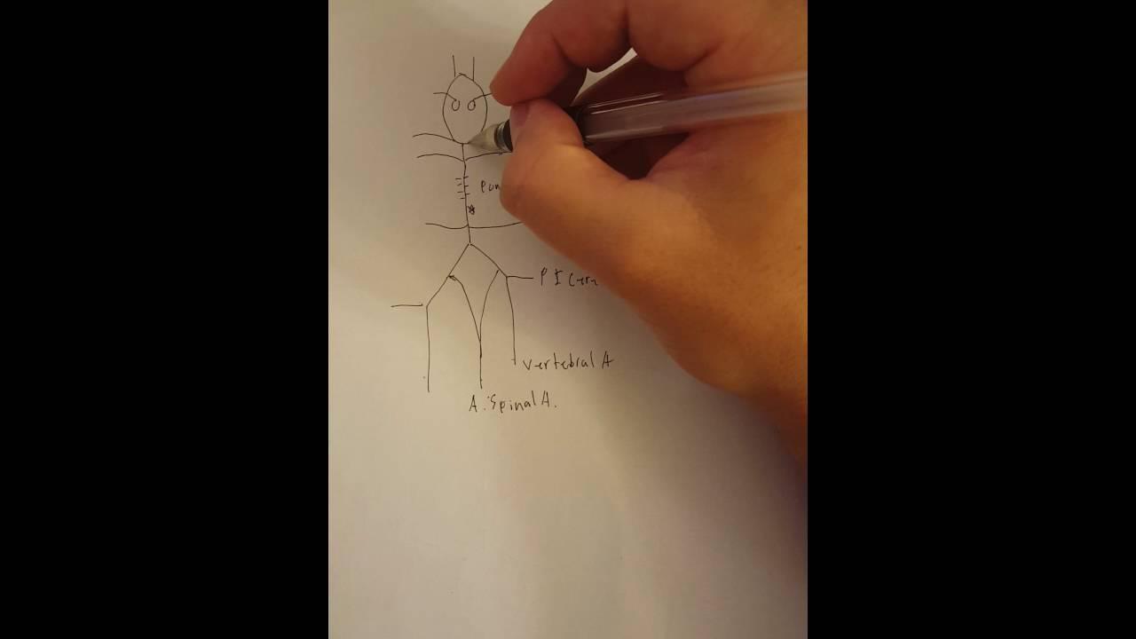 1280x720 Circle Of Willis Mnemonic Drawing