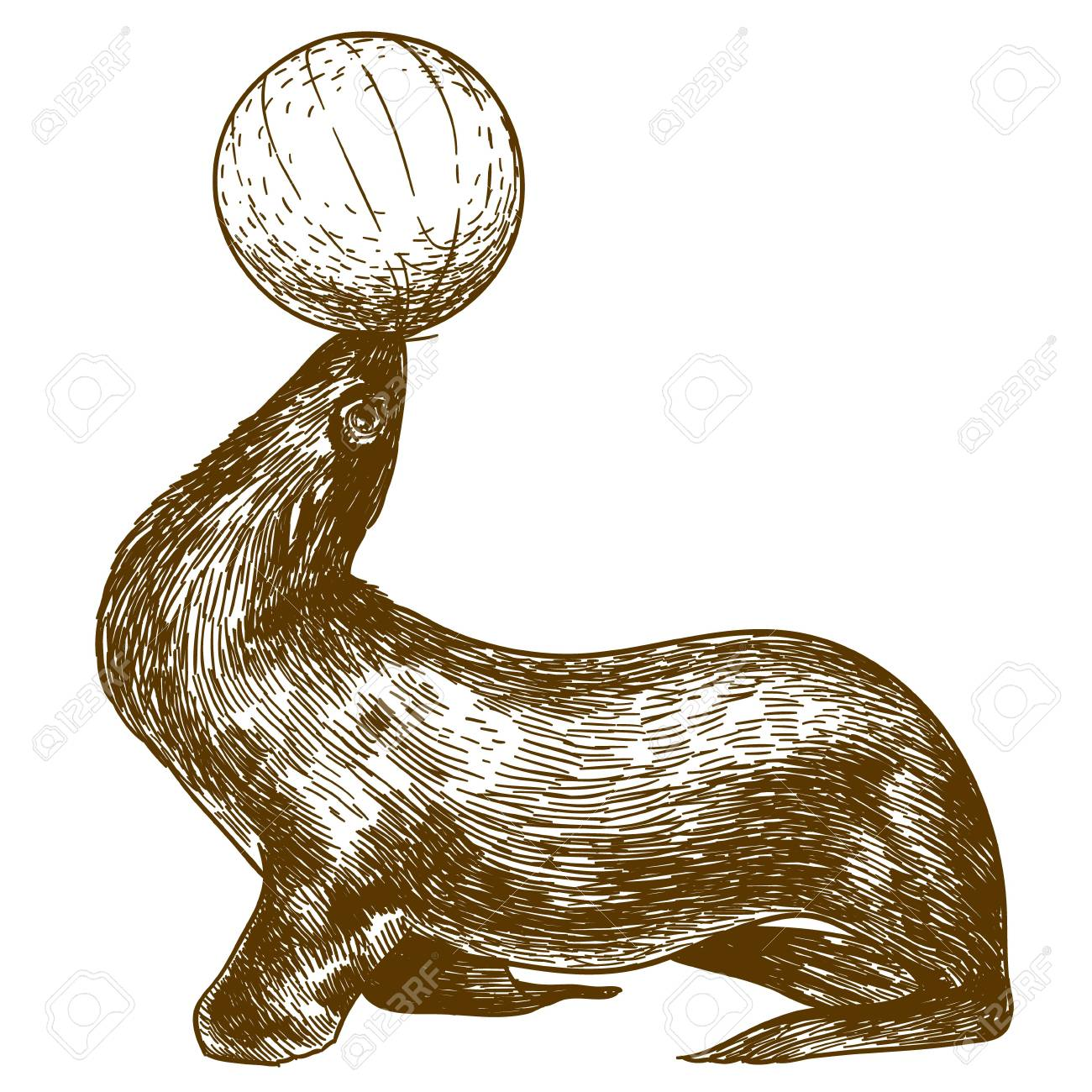 1300x1300 Vector Antique Engraving Drawing Illustration Of Circus Sea Lion