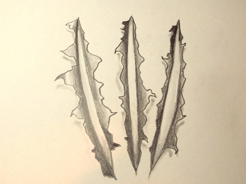 3000x2250 How To Draw Wolverine Clawmarks