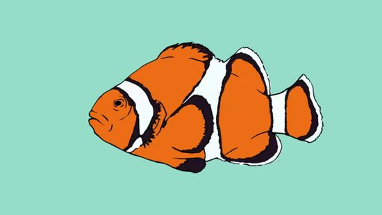 550x309 How To Draw A Clownfish 9 Steps (With Pictures)