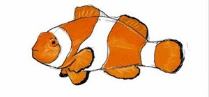 300x140 How To Draw A Simple And Colorful Clownfish (Pez Payaso) Drawing