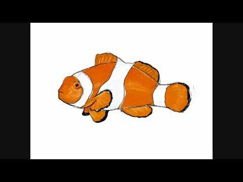 480x360 How To Draw A Clownfish