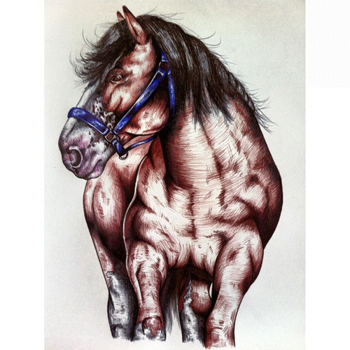 500x500 It's My Life Of All Sorts Clydesdale Drawing Fred.