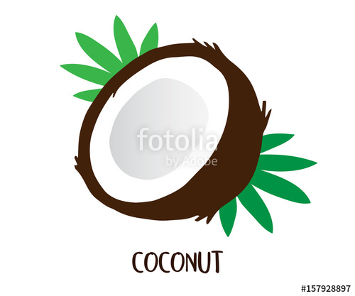 500x417 Coconut Vector Illustration Drawing, With Writing, Coconut Cut