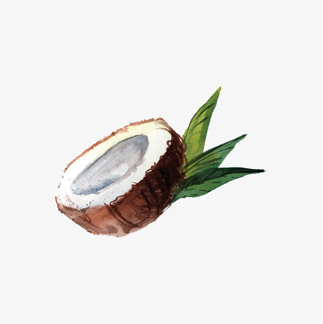 650x651 Drawing Coconut, Brown, Hand Painted, Coconut Png And Vector