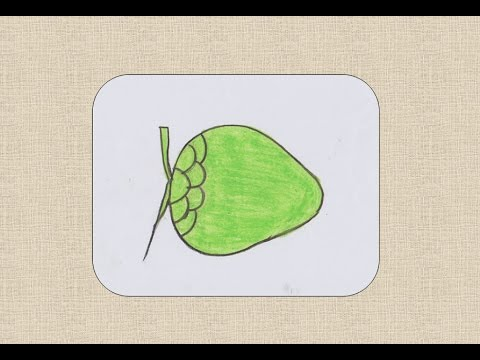 480x360 How To Draw Coconut For Kids