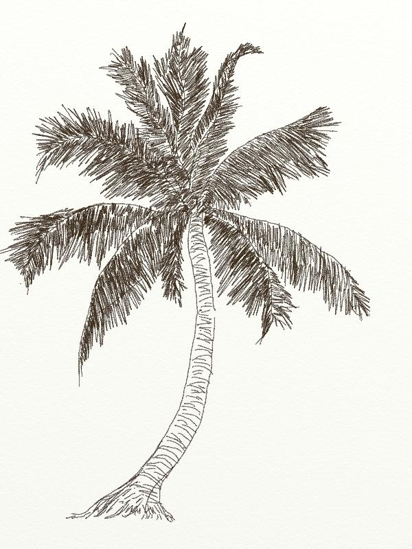 600x800 Drawing A Tree