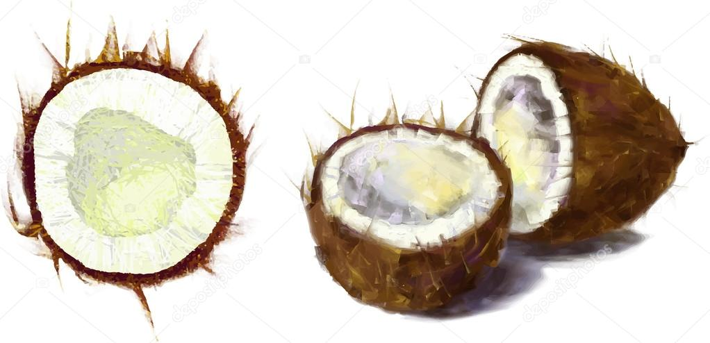 1022x494 Drawing Coconut Set Stock Photo Lemuur