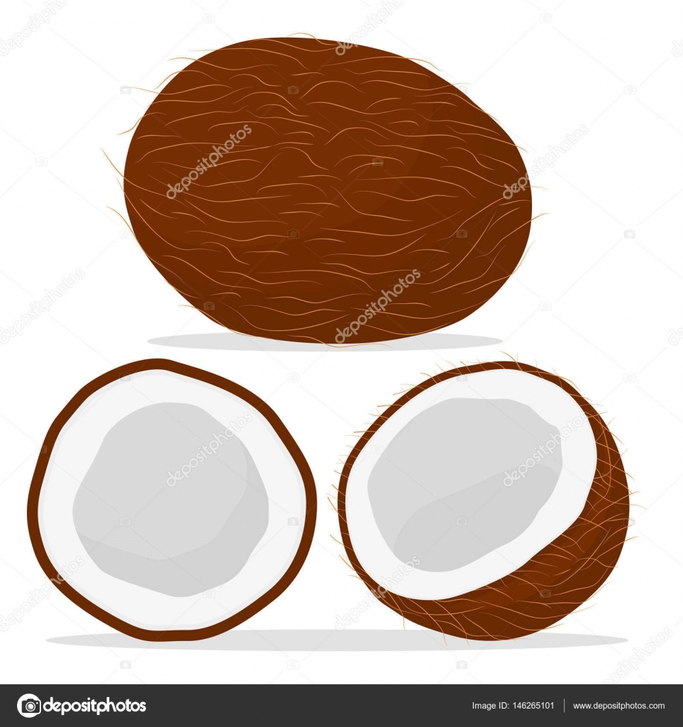 963x1024 Fruit White Coconut Stock Vector Oleg525