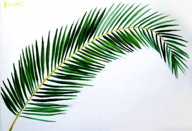 615x420 Coconut Palm Tree Leaf Picture Artsy Palm Tree