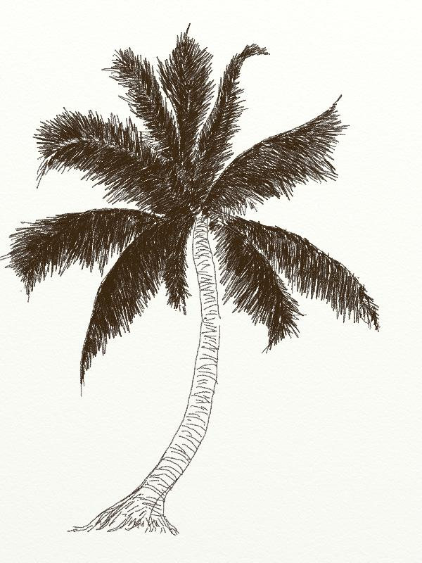 600x800 How To Draw Coconut Tree Drawing ~ Trees Draw