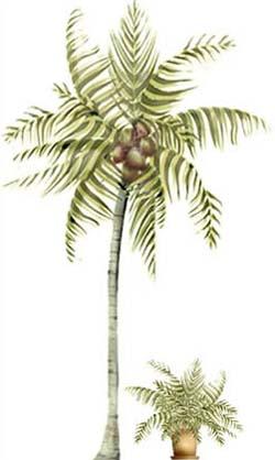 250x418 Palm Tree Stencils Free 1001 Coconut Palm Printables