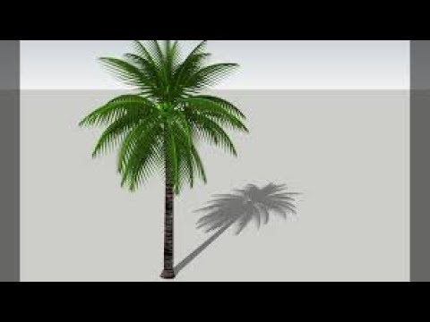 480x360 How To Draw A Coconut Tree Drawing A Coconut Tree For Kids 3d