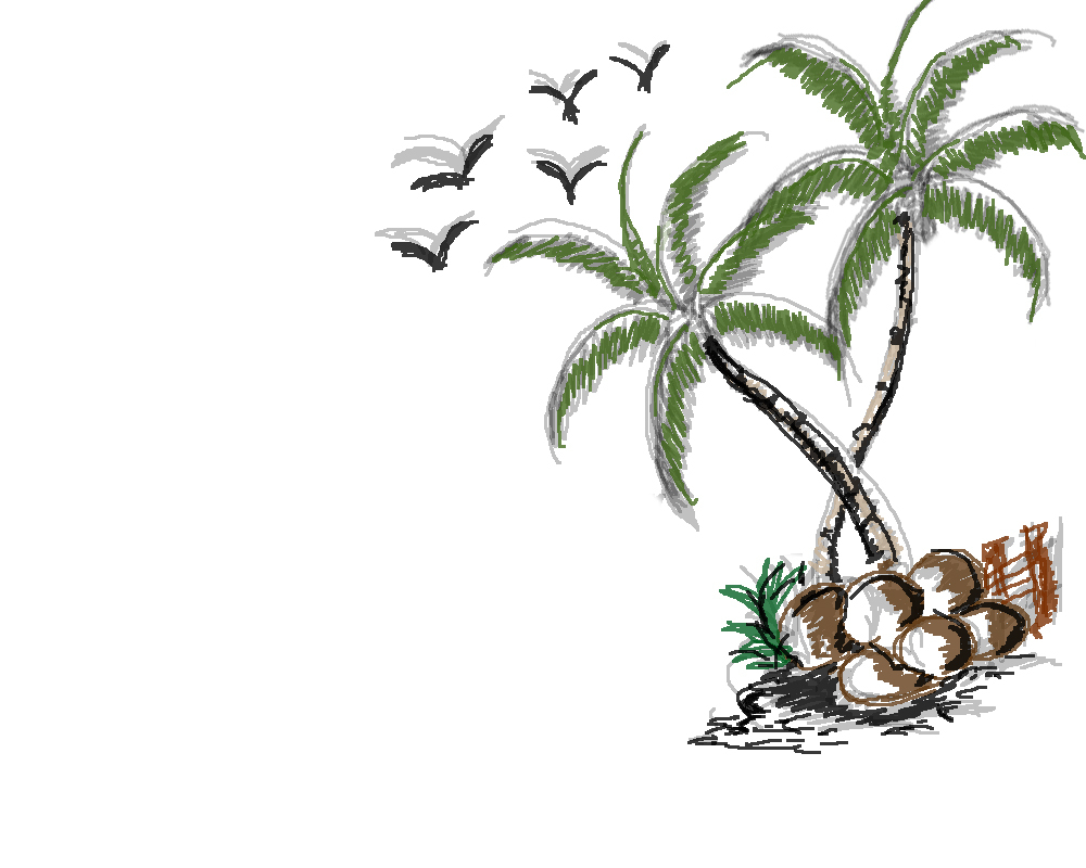 1000x800 Sketch Of A Coconut Tree Drawing Of Coconut Tree My Site