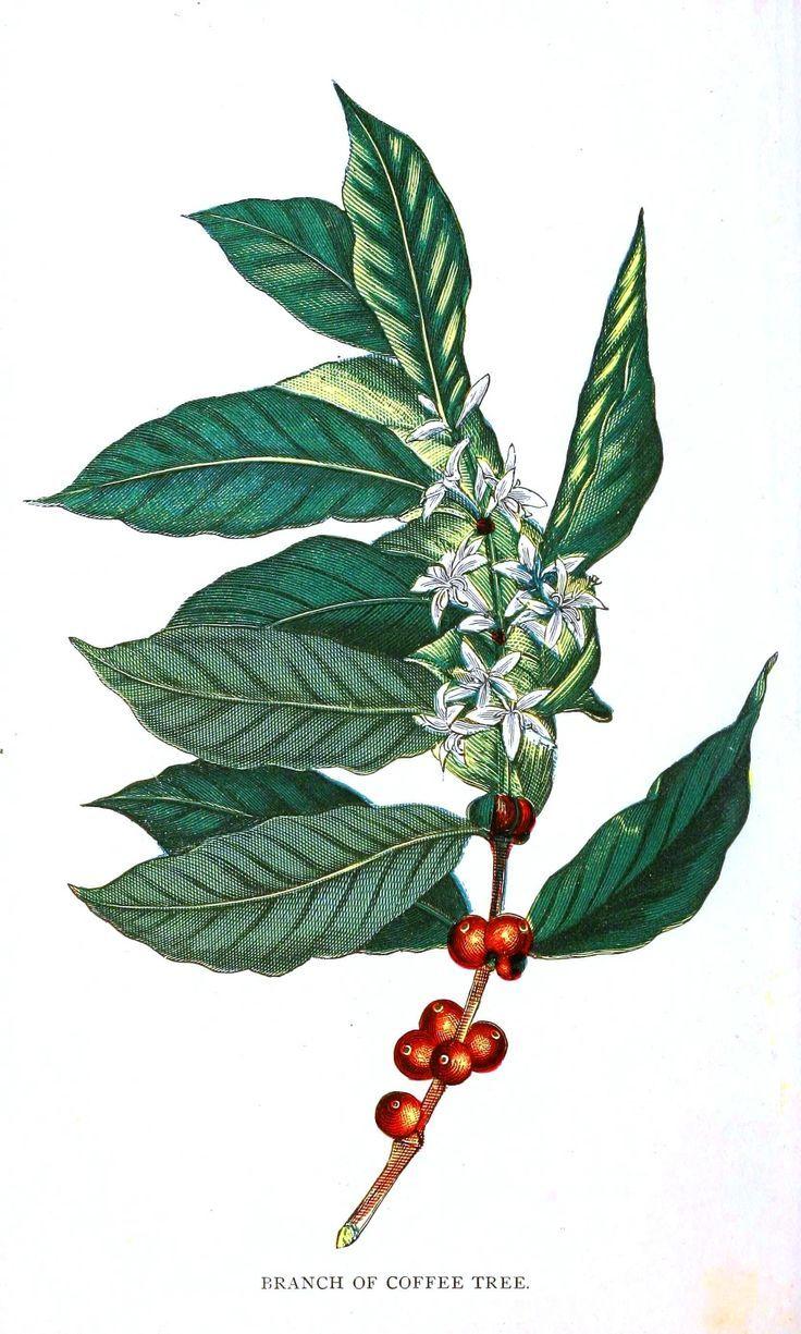 736x1225 8e3e89f074e7f8c983c87f202a90a546 Coffee Menu Coffee Coffee.jpg