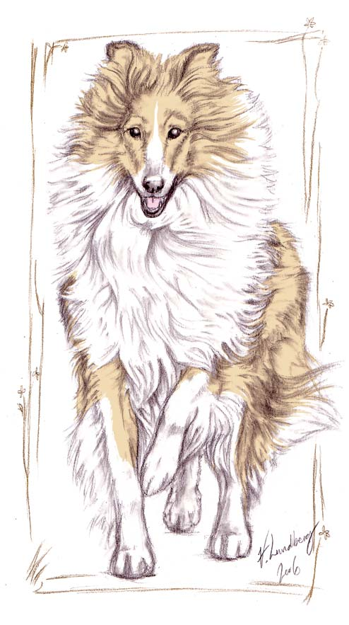 494x883 Collie Drawing By Solkatt