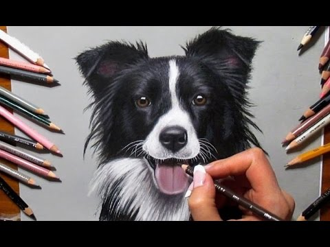 480x360 Colored Pencil Drawing Border Collie