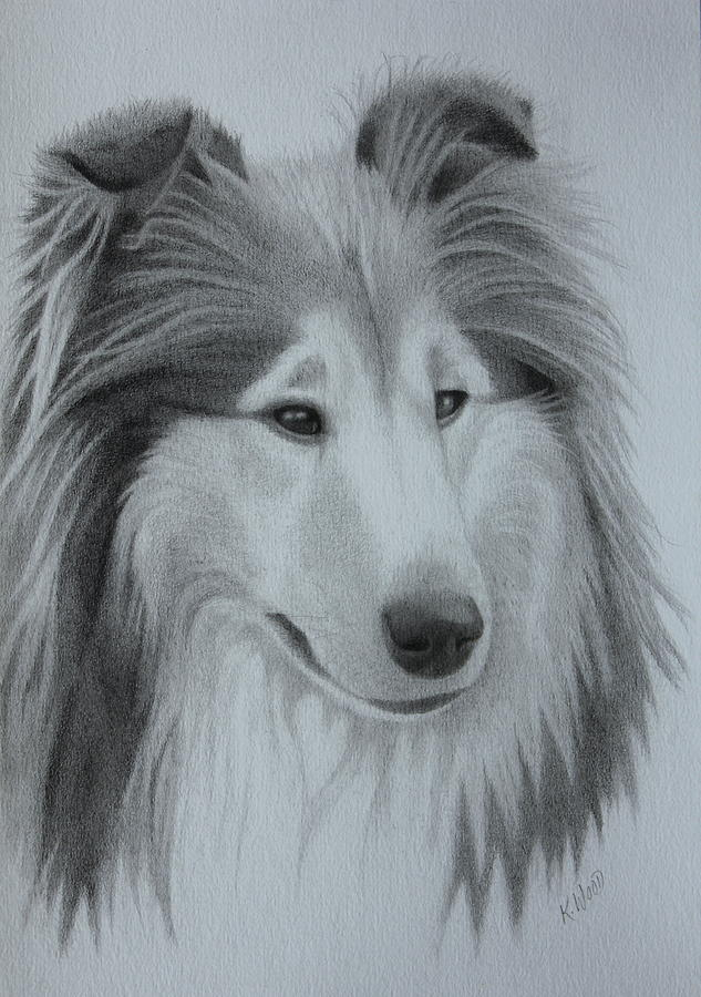 633x900 Diamond Rough Collie Drawing By Karen Wood
