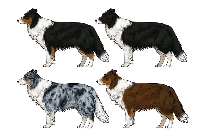 700x457 How To Draw A Dog Details Make The Difference