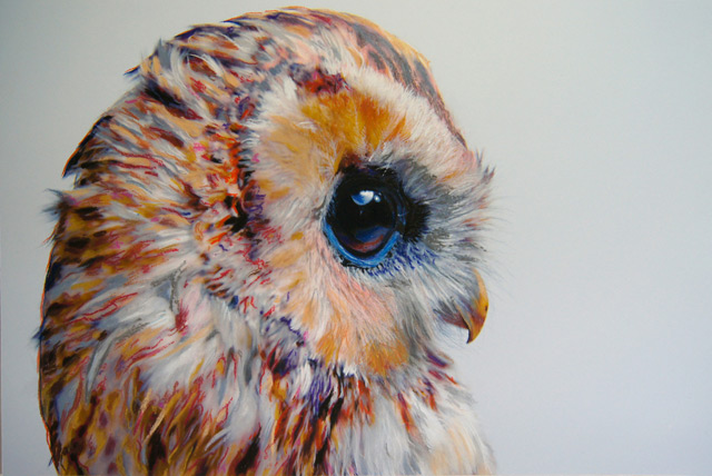 640x428 Colored Owl Drawings By John Pusateri Colossal