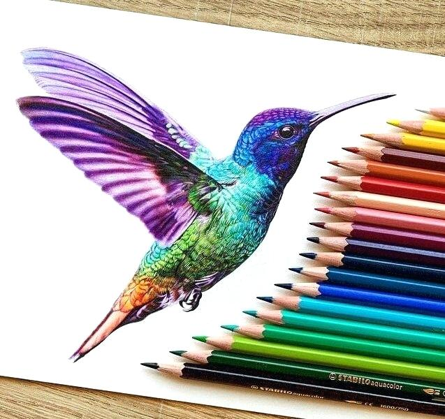 637x600 Color Pencil Drawing Ideas Color Drawing Pictures Color Pencil