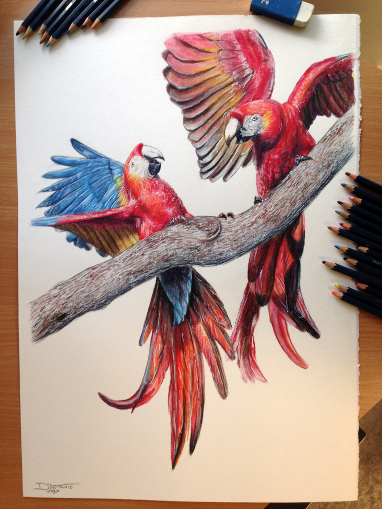 768x1024 Pencil Color Drawing 1000 Images About Pencil Amp Color Drawing