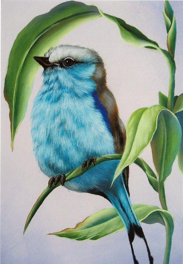 602x867 amazing colored pencil bird … pinteres…