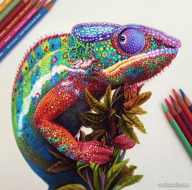 660x652 Chameleon Color Pencil Drawing By Morgan Davidson 2