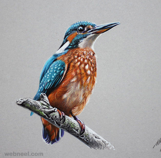 660x647 Color Pencil Drawing Bird 21