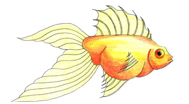 648x359 color pencil lesson 2 from page 2 - Coloring Fish 2