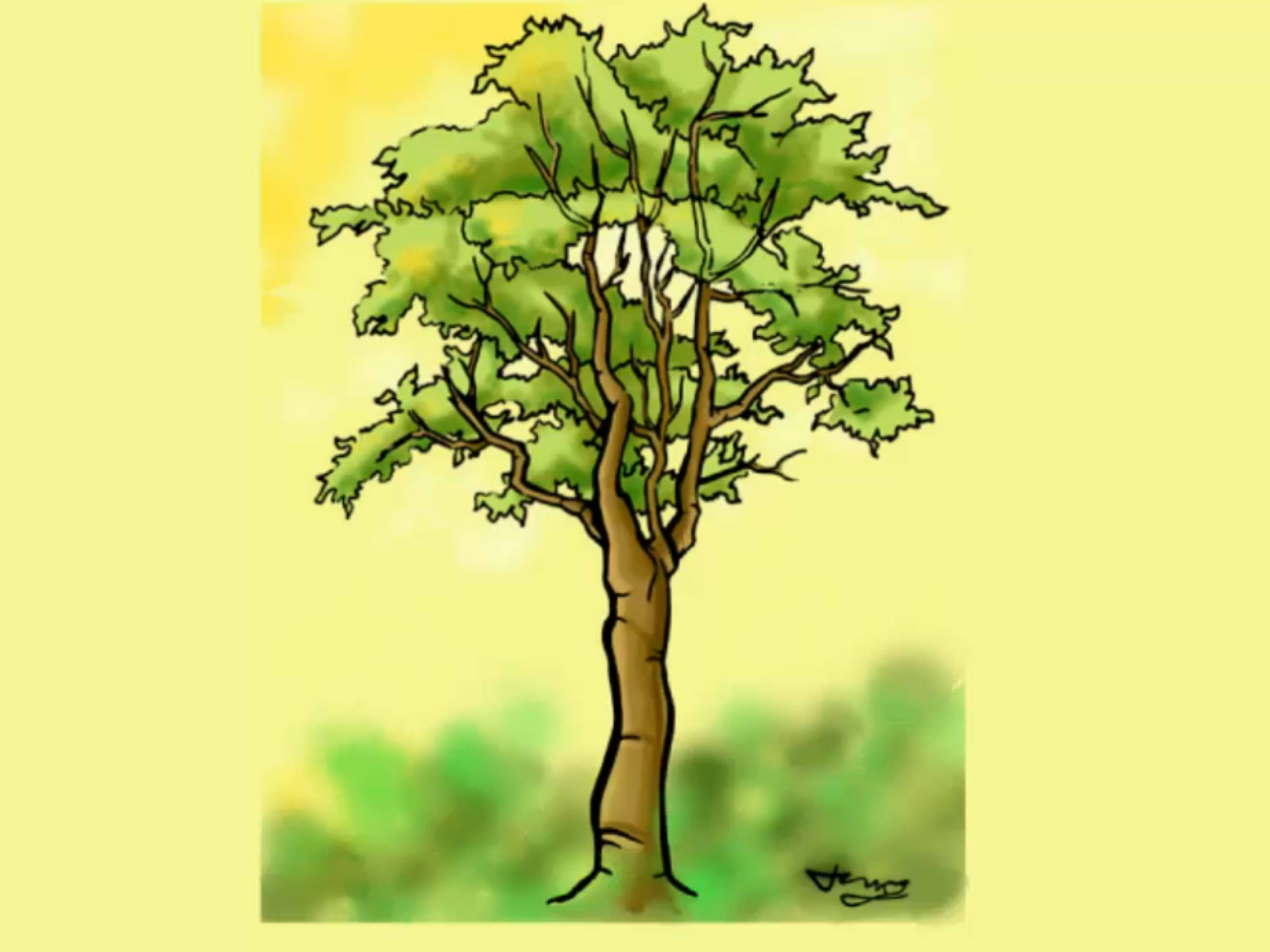 Colored Tree Drawing at GetDrawings.com | Free for personal use ...