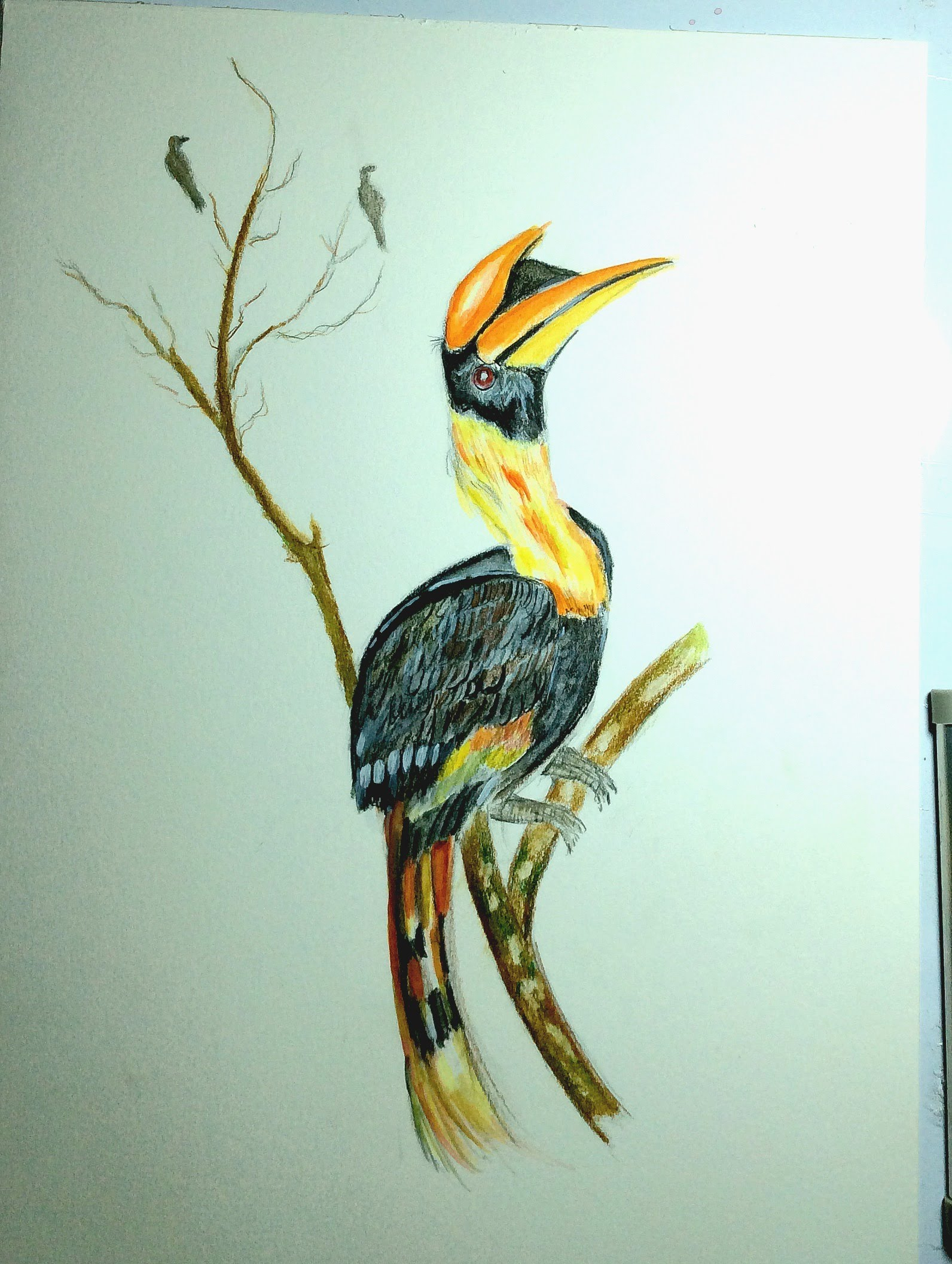 Colorful Bird Drawing at GetDrawings.com | Free for personal use ...