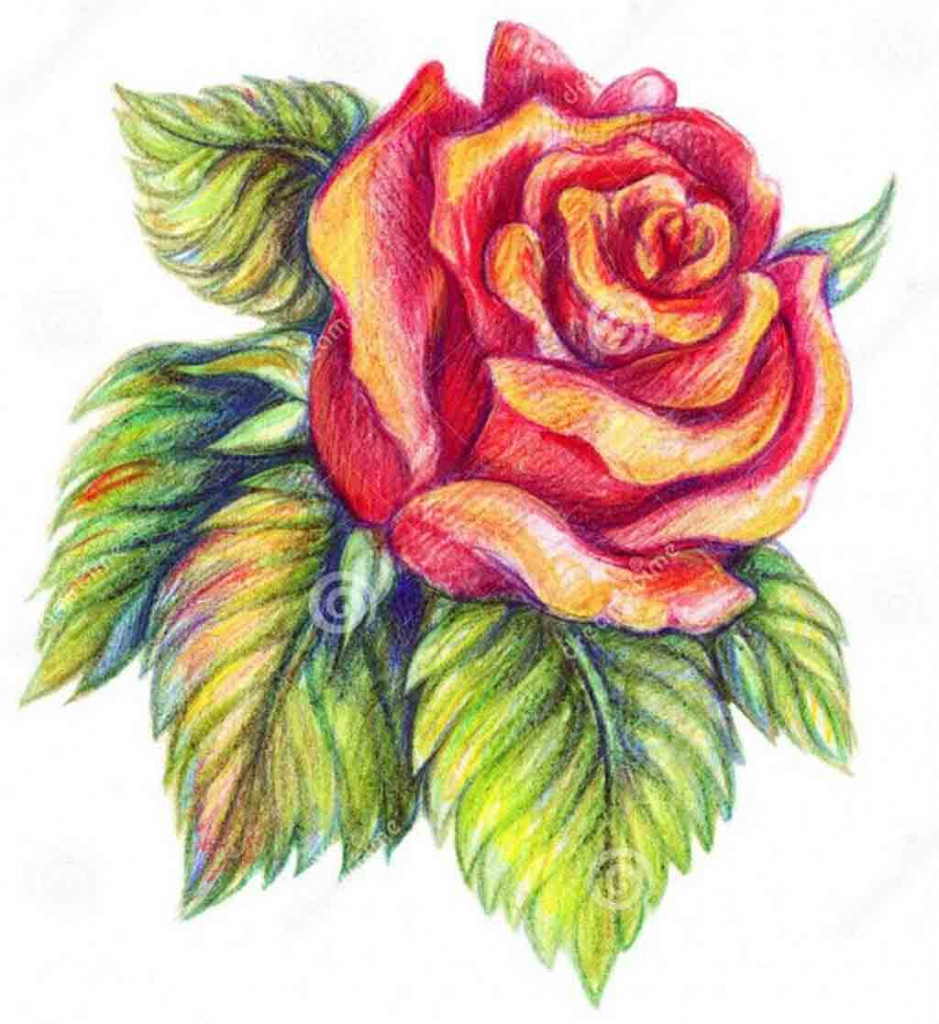 939x1024 Colour Sketch Drawings Colour Pencil Drawing Of Flowers Color