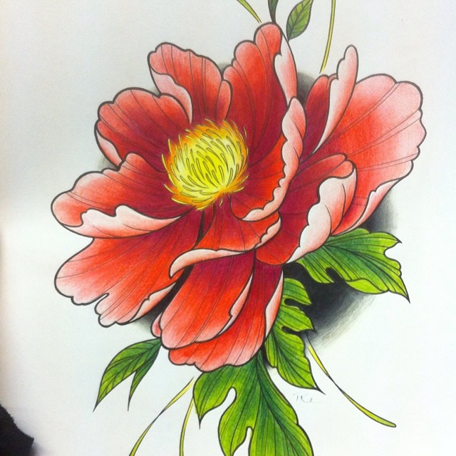 640x640 Photos Pencil Colour Sketches Flowers Design,